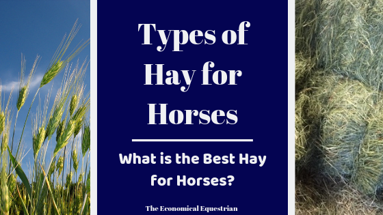 The Different Types of Hay for Horses